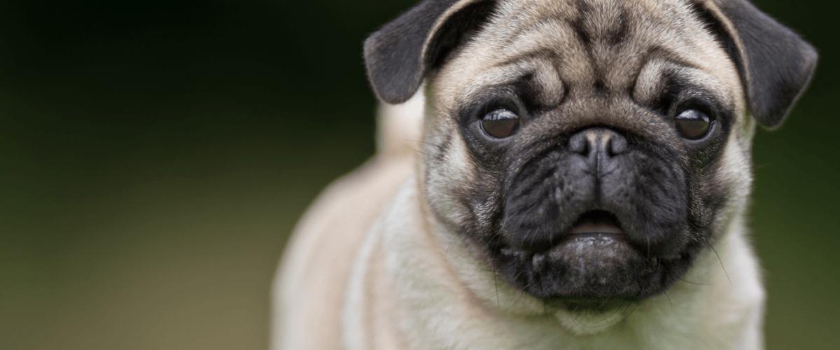 salute dell'animale domestico